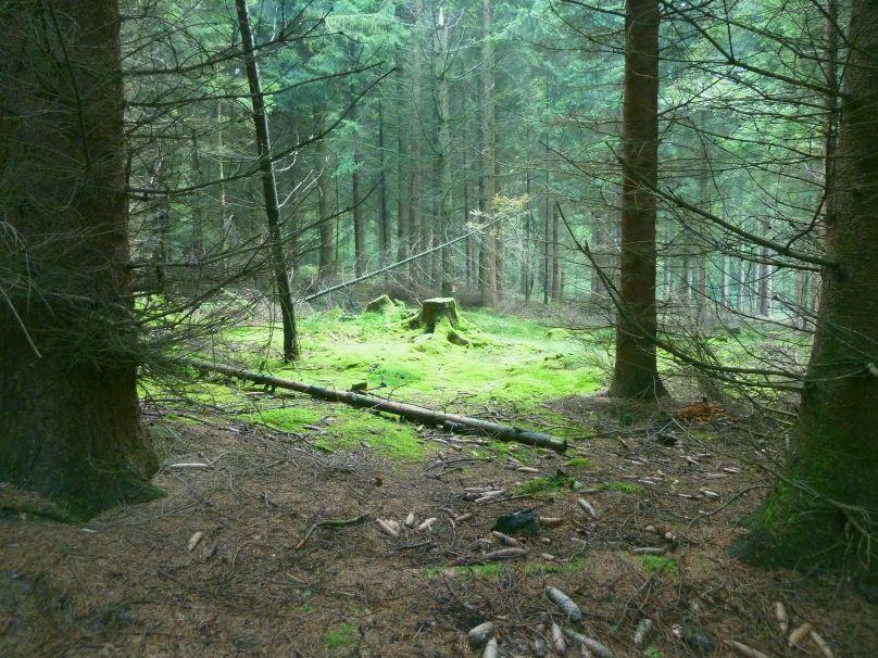 roedinghausen forest